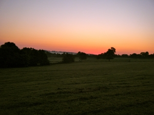 Sunrise over Beechwood pastures